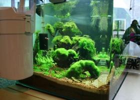 Aquarium von der Seite