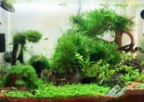 Aquarium nach 7 Monaten