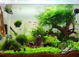 Aquarium nach leichten Veränderungen und Pflanzen stutzen