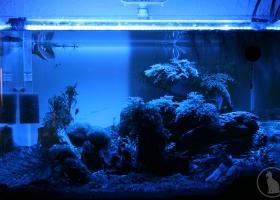 Aquarium bei Nacht