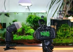 Canon 700D & Tamron Objektiv SP 60mm Macro 1:1