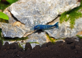 Blue-Carbon-Rili
