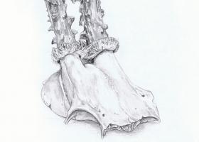 Hirschschädel